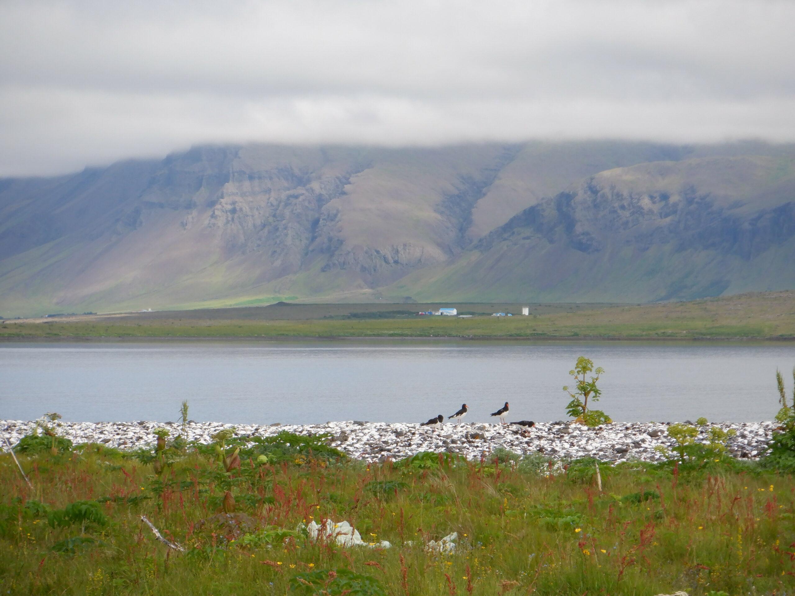 arctic-sea-kayaks-geldinganes-14
